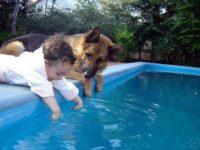 Syrius-Kutyaiskola-nemet-juhasz-kisbabaval-a-medencenel