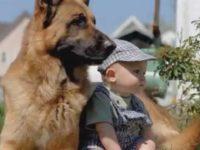Syrius-Kutyaiskola-nemet-juhasz-kisbabaval