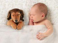 Syrius Kutyaóvoda - gyerek és kutya a családban