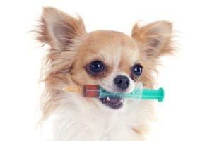 A (kölyök)kutyák kötelező és ajánlott oltásairól