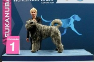 World Dog Show Leipzig 2017.11.11.