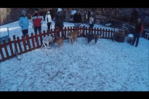 Syrius Kutyaiskola Pécs – egy régebbi videó