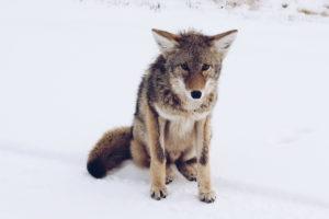 A Syrius Kutyaiskola mai foglalkozásai elmaradnak 2018.03.03. szombat