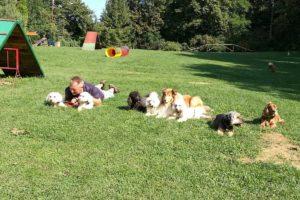 Syrius Kutyaiskola kistestű társasági kutyák foglalkozása 2019. április 28.